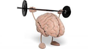 Gehirn als Gewichtheber