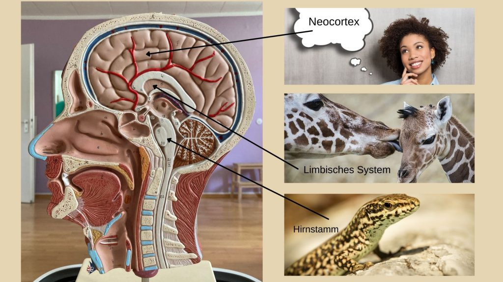 Modell Gehirn, Giraffe mit Kind, Eidechse, Frau mit Sprechblase