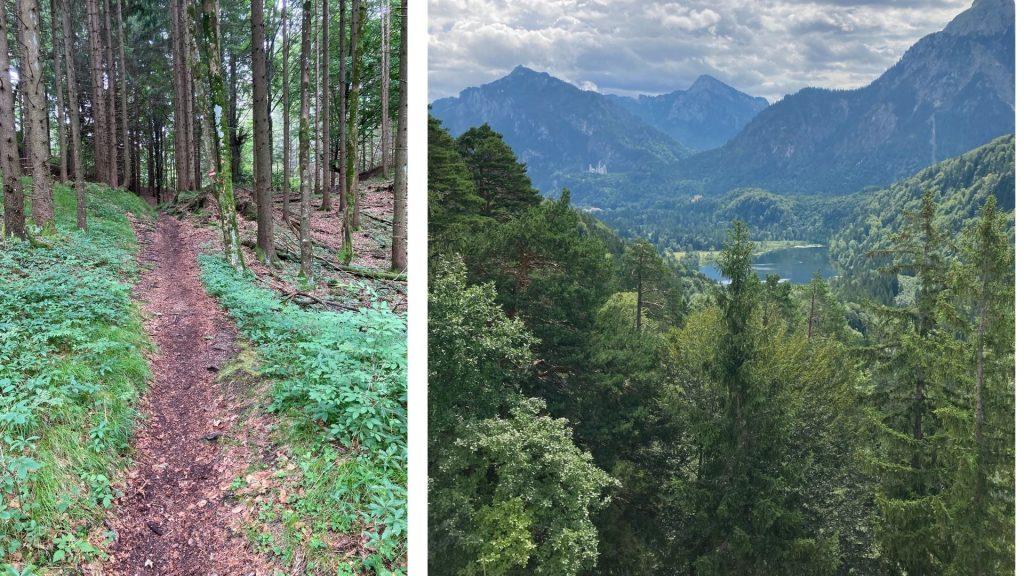 Waldweg, Schwansee